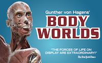 BODY WORLDS: PULSE